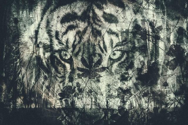 Tiger-Edit_TP_V.jpg